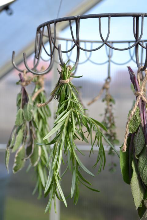 Kryddväxter – gläder alla sinnen!