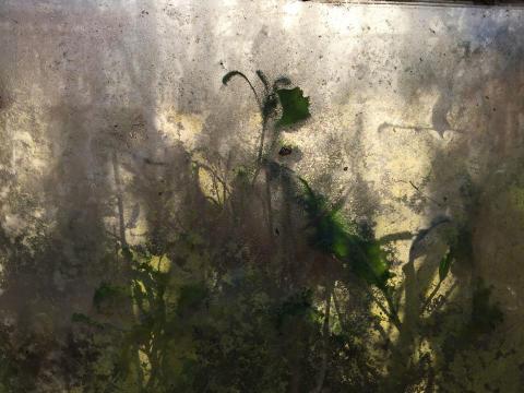 Astroekologi - Plantlife