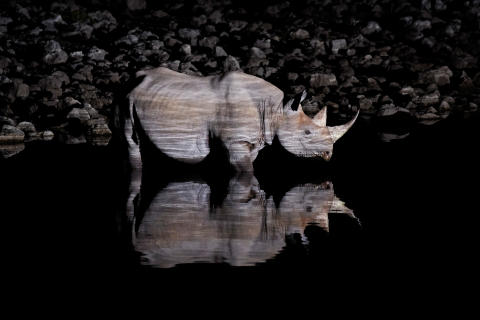 Jan Ryser,  Black rhinoceros at night