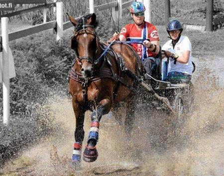 Full fart med häst och vagn runt Falsterbo