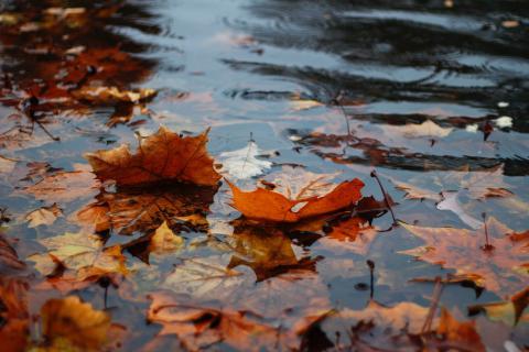 Det milda vädret bidrar till lägre elpriser