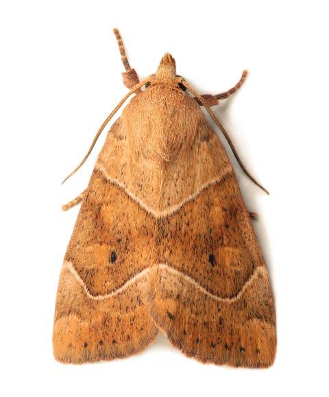 Mott- och malfjärilar
