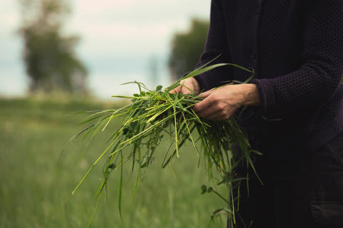 Gräs som binder kol