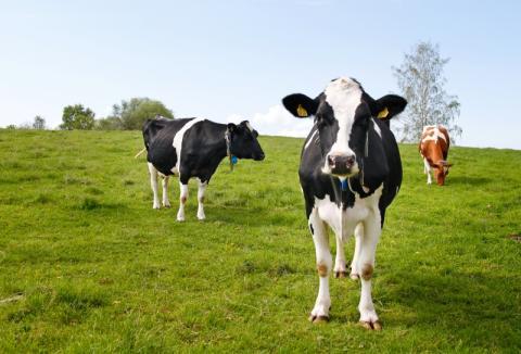 54 nya miljoner till forskning inom djurskydd