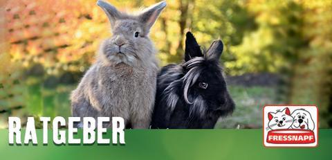 Fressnapf Tierratgeber 02/2019: Alles für ein artgerechtes Kaninchenleben