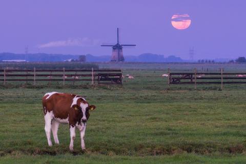 Dutch_Supermoon_1_Fullres_AlbertDros