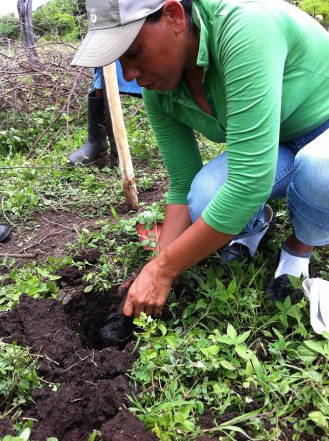 Plantering av träd