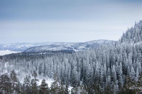 vinter i Höga Kusten