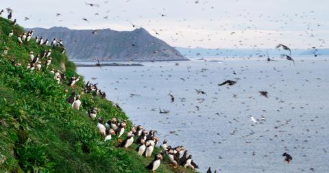 Die felsige Küstenlandschaft Finnmarks bietet großartige Naturschauspiele