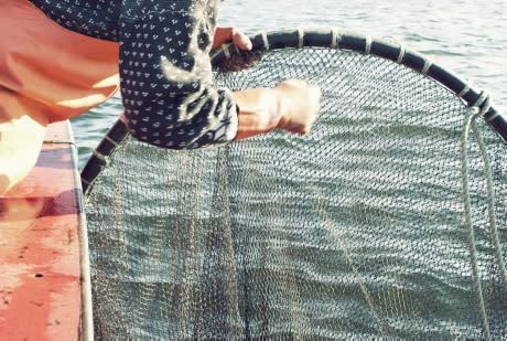 Positiv trend kan ge ökade fiskekvoter