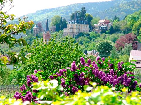 Deutsche Weinstraße – en symfoni av druer i Pfalz' solrike landskap