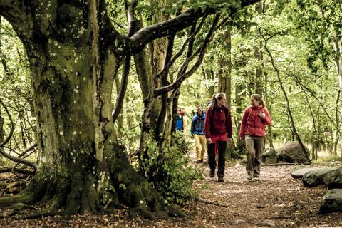 Vandrare i skogen