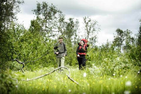 Summer hiking, Jämtland Härjedalen
