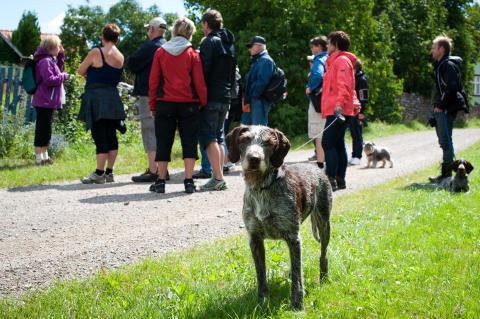 """Guidad matvandring på Öland """"Alvaret Sveriges Provence"""""""
