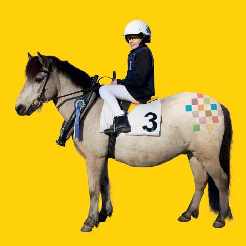 Precis som alla världsekipage: Upplev Häst finns på plats i Scandinavium