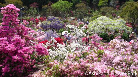 Ashikaga Flower Park(9)
