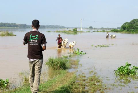 WTG-Indien-Ueberschwemmung-Rinder
