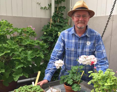 Workshop: Pelargoner - från frö till krukväxt