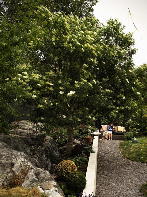 Trädgård.4