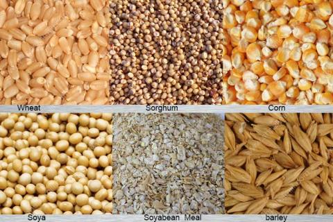 Global Poultry Feed Ingredients Market 2022 Trends, Challenges and Growth Drivers Analysis