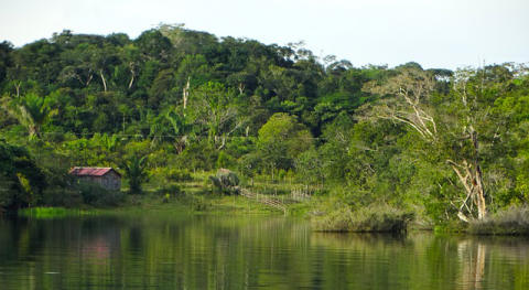 Large areas of the Brazilian rainforest at risk of losing protection