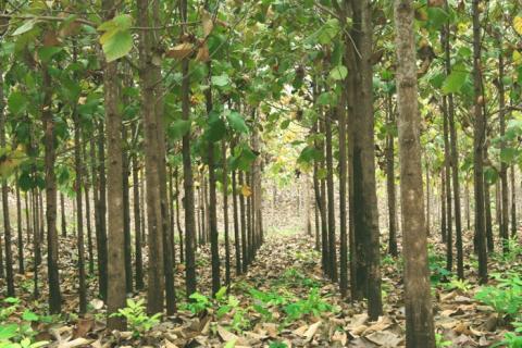 Waldinvestments: Baum schlägt Immobilie