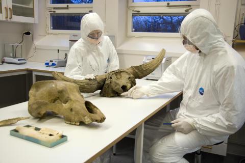 Grottbjörnen är utdöd men deras DNA finns kvar