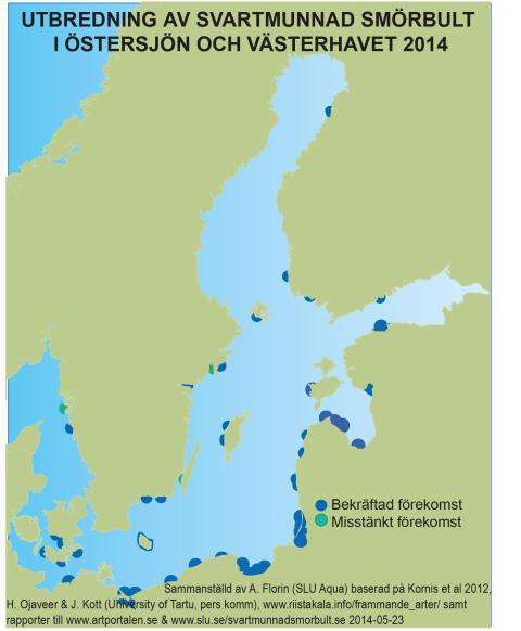 """Invasiv fiskart ökar snabbt i Sverige: """"Nya fynd  i Göteborg och vid Öland"""""""