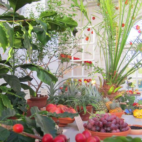Exotisk och traditionell julutställning i Bergianska trädgården