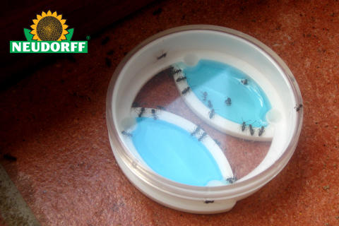 Myr Effekt utrotar myrorna inomhus