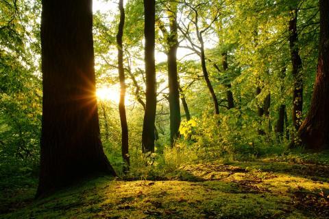 Bokskogens dag i Torup firar 20 år