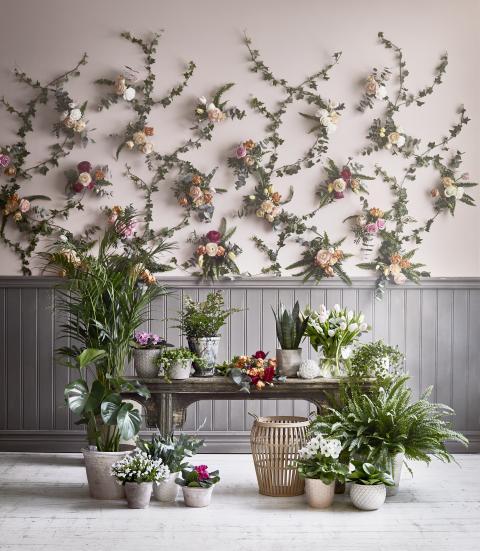 Romantisk lantidyll - Blomsterlandet