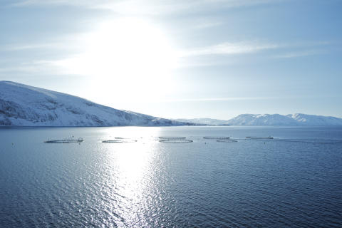 Beste Bedinungen für besten Lachs: das kalte, klare Meer Norwegens.