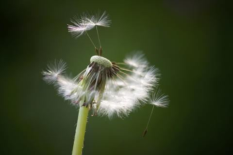 Pollenallergi ska behandlas i tid