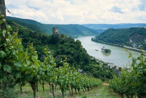 Reselandet Tyskland: Över hälften av de utländska semesterresenärerna väljer att återvända
