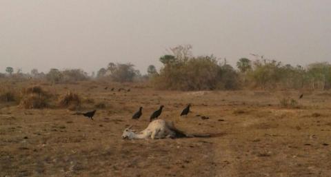 Bolivia oplever værste tørke i 25 år