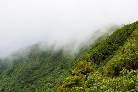 Hvordan kan skovene redde klimaet?
