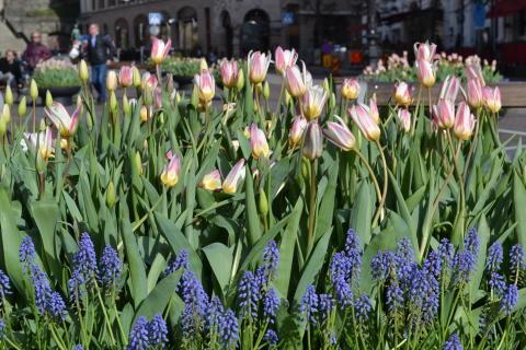 Pressinbjudan: Äntligen! Nu kommer våren till Helsingborg