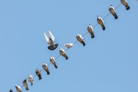 Utökad rätt för miljöorganisationer att överklaga igen – representanter för fåglar stoppar kraftledning