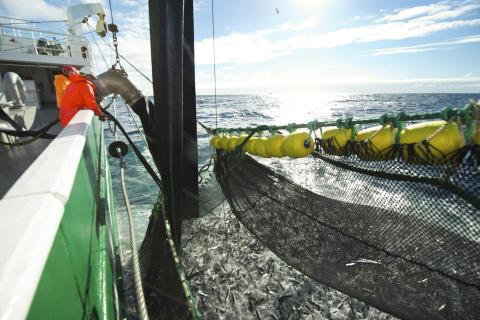 Sterk makrelleksport i september