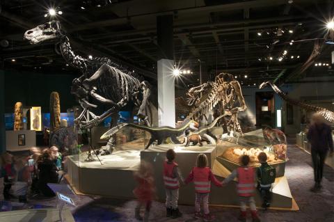 Utställningen Fossil och evolution