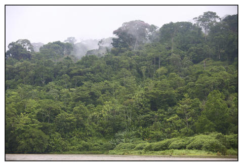 Regnskov i Panama