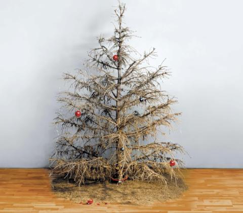 Renovasjonsetaten henter ditt visne juletre