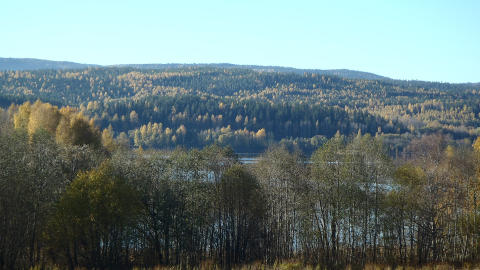 Ekosystemtjänster i skogen – viktig helhetssyn, men trubbigt verktyg för prioriteringar i skogen