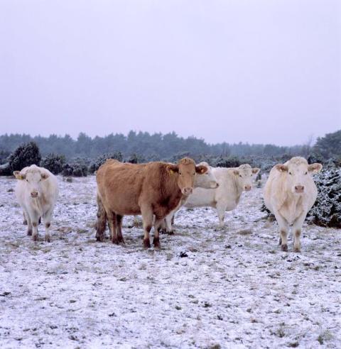 Kor_vinter