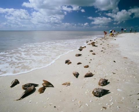 Sanibel Island, Florida. Foto: iStock