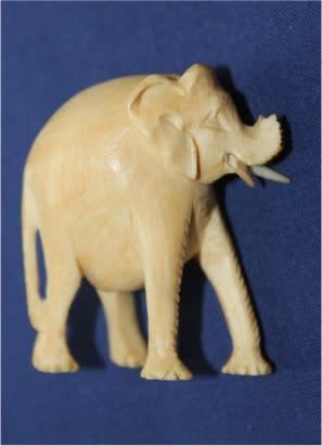 Ivory 02