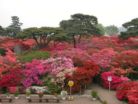Tsutsujigaoka Park(2)