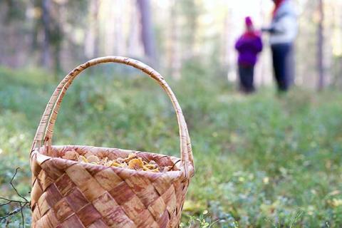 Metsähallitus kannustaa liikkumaan luonnossa