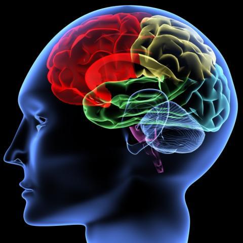 Vi vill ha Nationella riktlinjer för epilepsivården – nu!